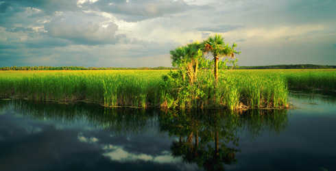 (ALL RIGHTS, CREDIT MANDATORY) Fakahatchee Strand marshes