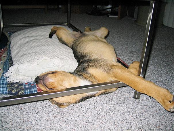 כלבים-ישנים-27