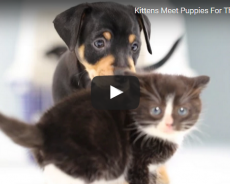 When Dogs And Cats Meet For The First Time (VIDEO)